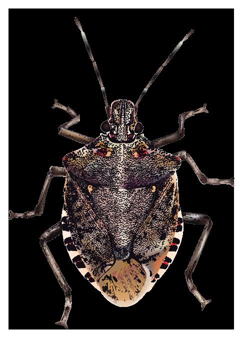 Bugs Transparent Background - Bug PNG