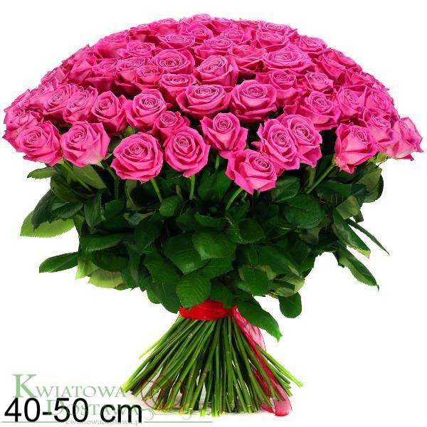 Kreator róż 40-50 cm.png - Bukiet Kwiatow PNG