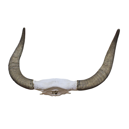 Bull By The Horns PNG-PlusPNG