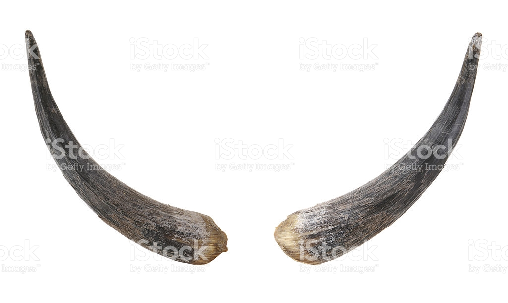 Bull Horns royalty-free stock photo - Bull By The Horns PNG