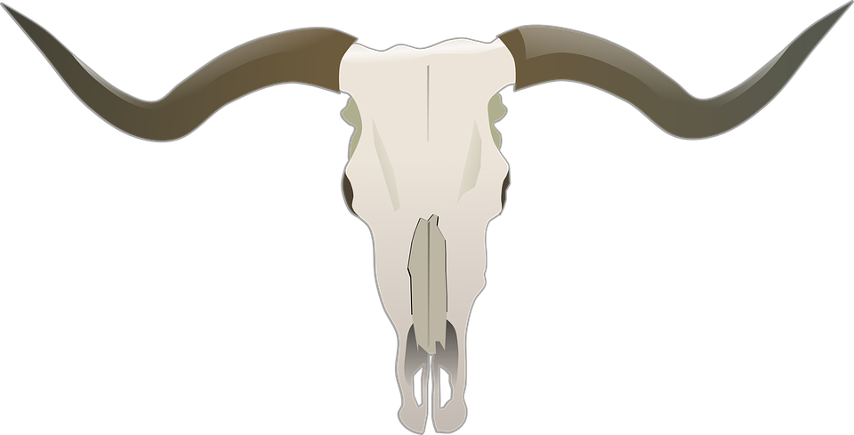 longhorn beef bones bull skull buffalo horns - Bull By The Horns PNG