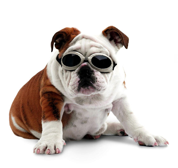 Bulldog PNG Transparent Images PNG All - Bulldog PNG