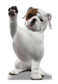 Bulldog PNG - 14872