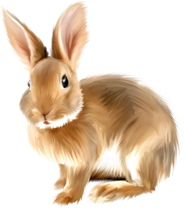 Bunny PNG - 27617