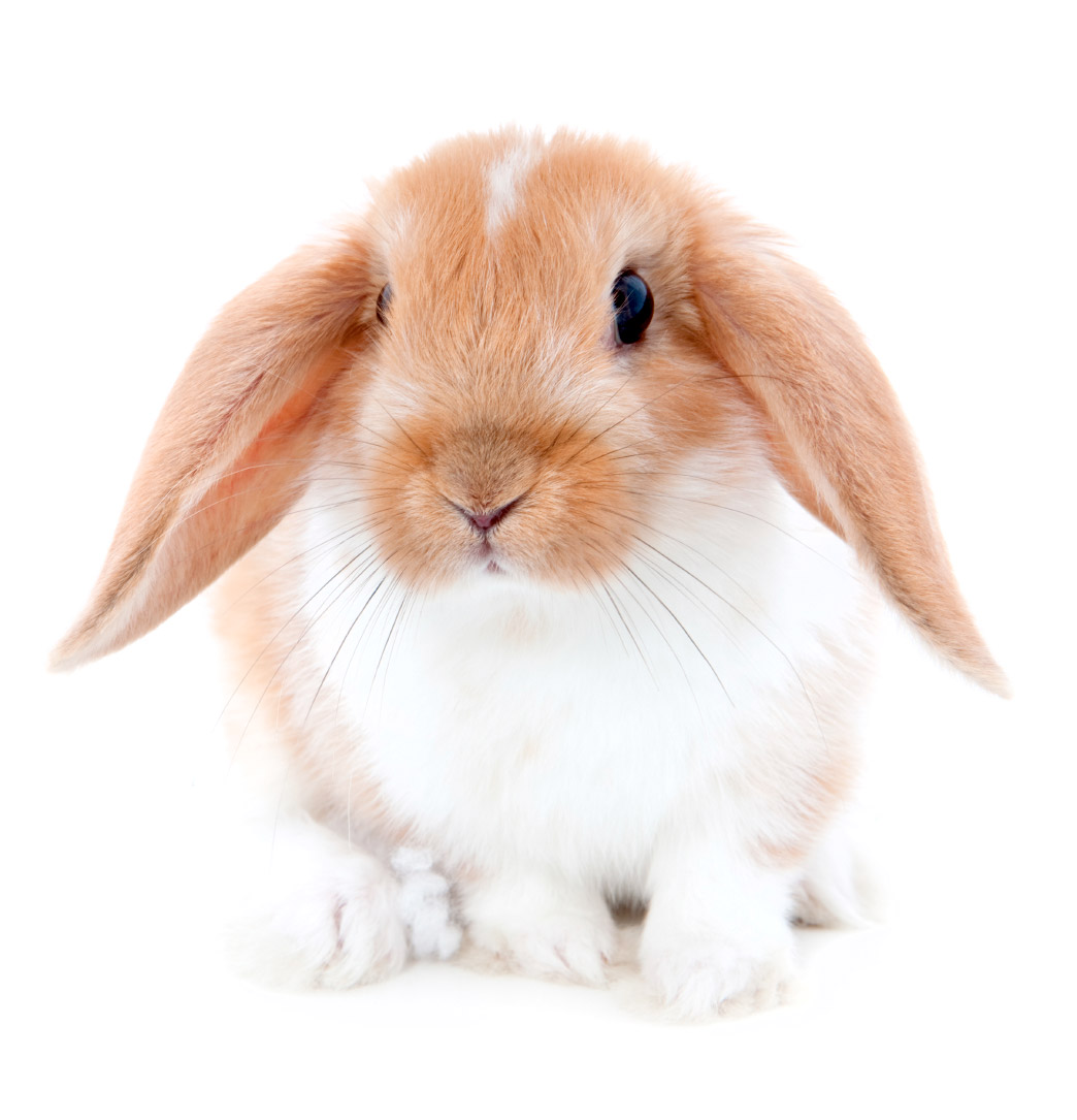 Bunny PNG - 27626
