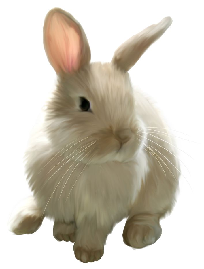Bunny PNG - 27618