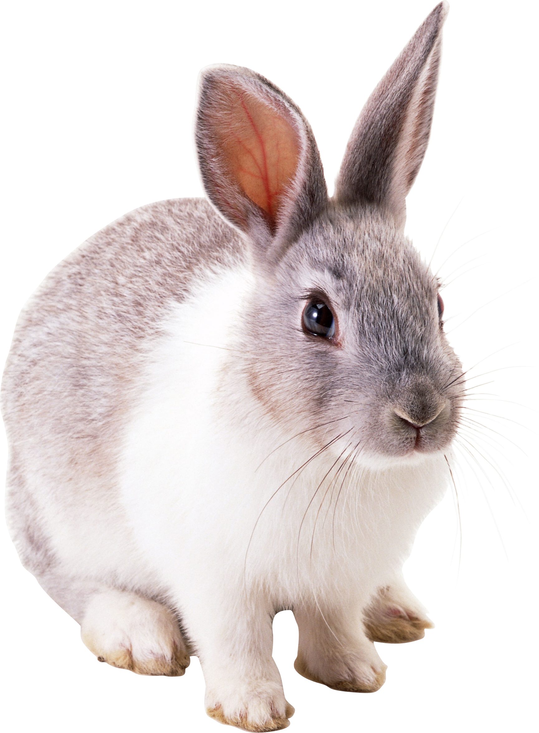 Bunny PNG - 27625