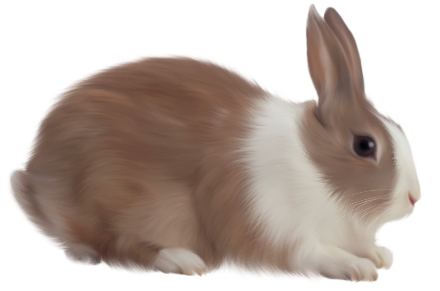 Bunny PNG - 27624
