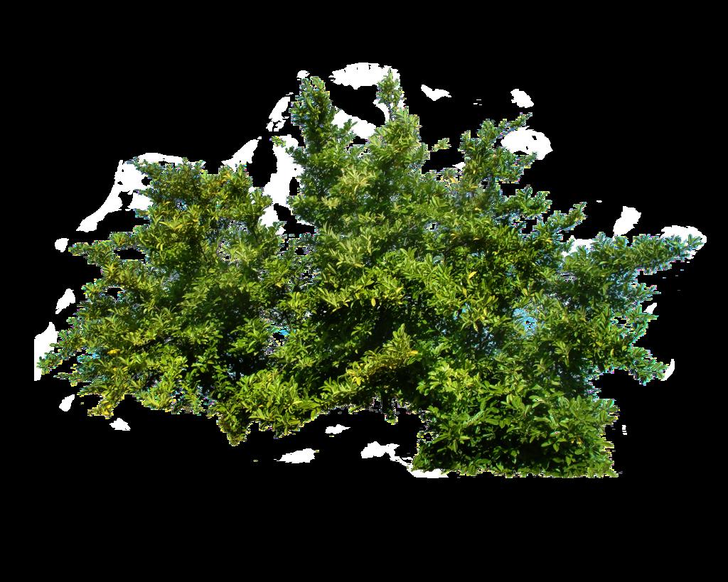 Bush HD PNG