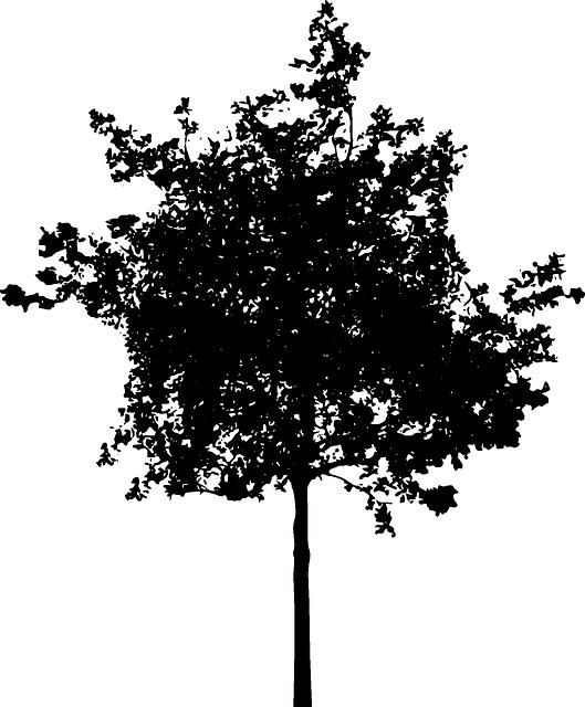Bush PNG Black And White - 151866