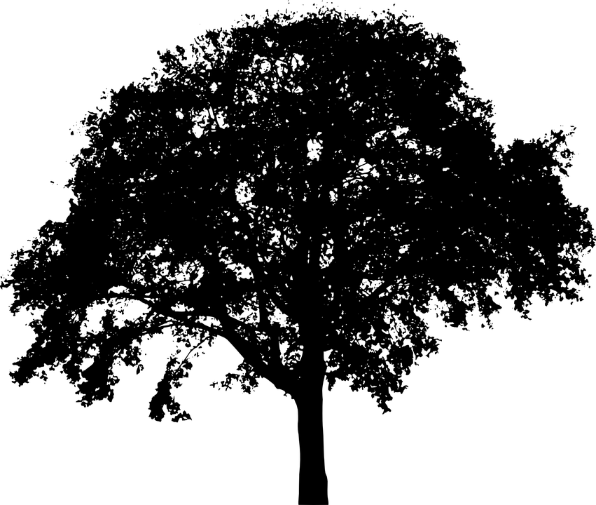Bush PNG Black And White - 151862