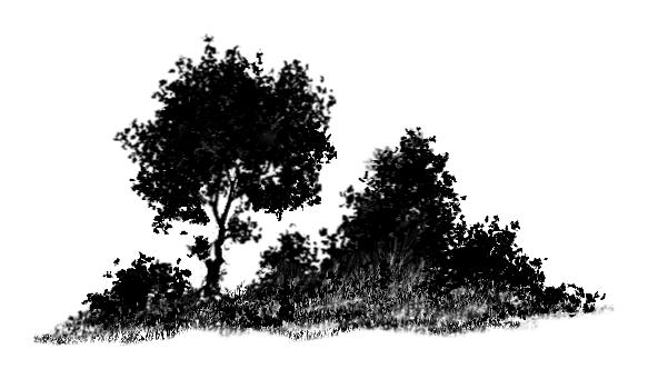 Bush PNG Black And White - 151855