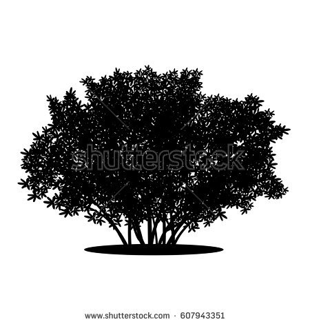 silhouette bush with leaves and shadow on white background - Bush PNG Black And White