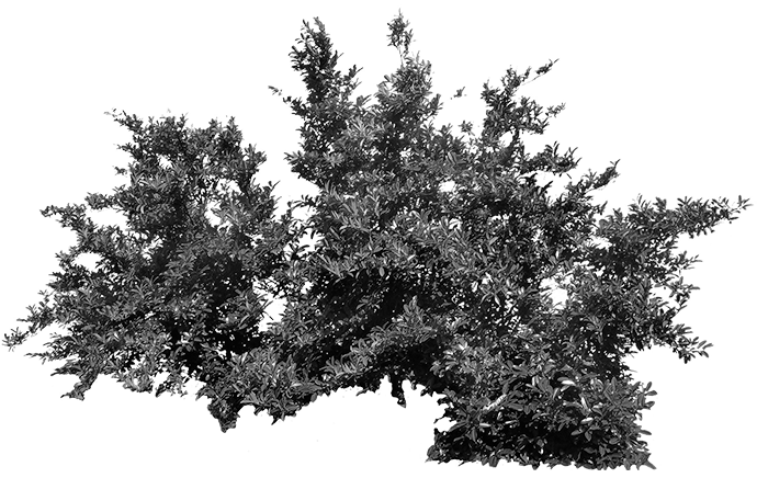 Bush PNG Black And White
