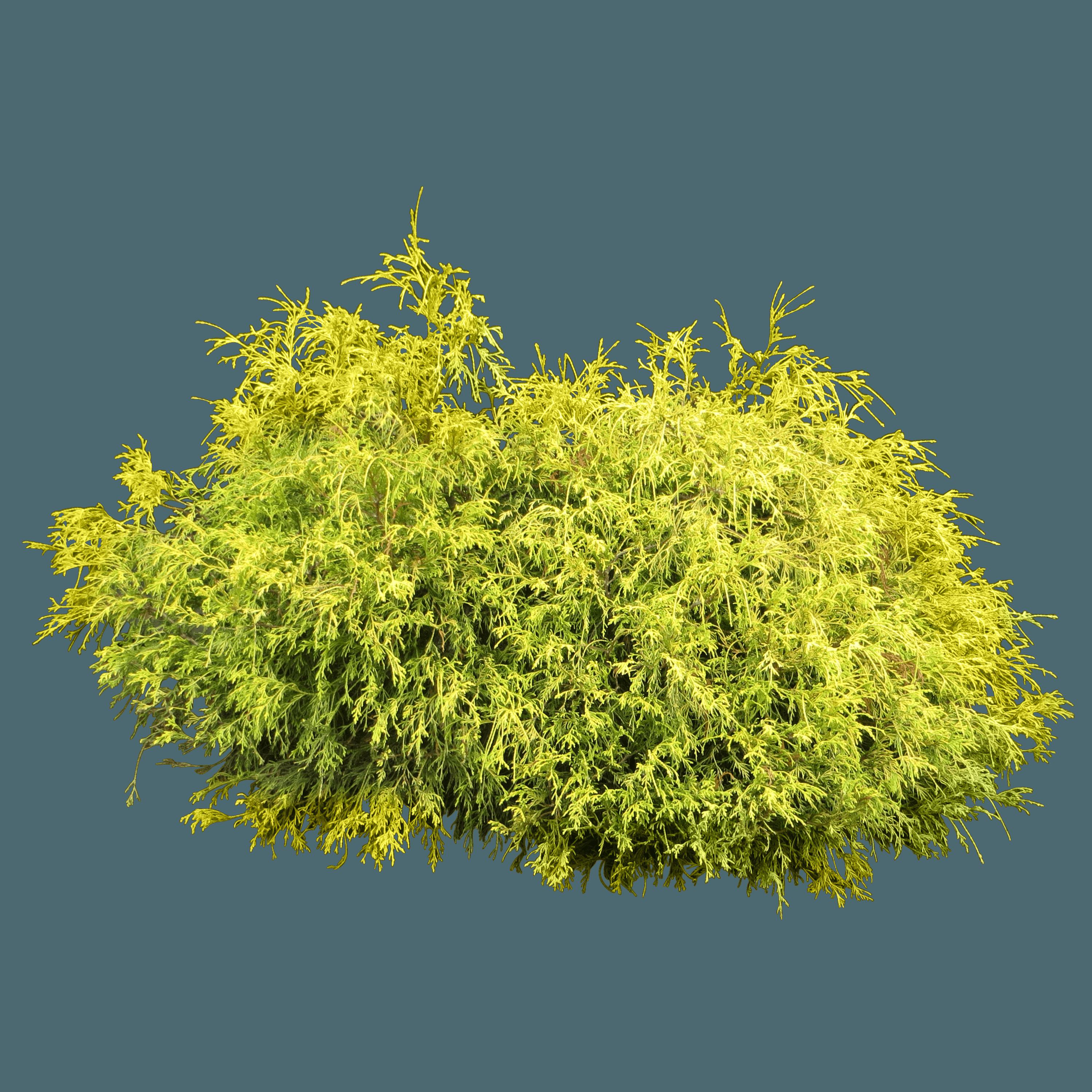Bush PNG - 18851