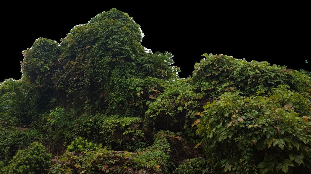 Bush PNG - 18860