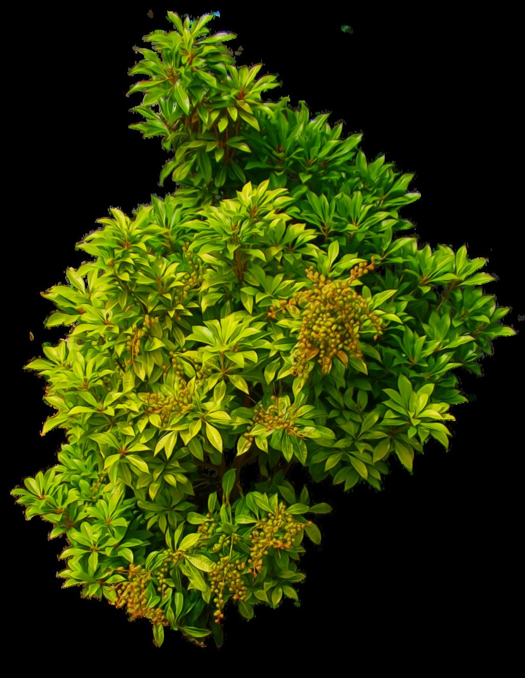 Bush PNG image - Bush PNG