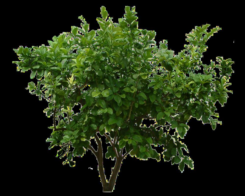 Bush PNG - 18848