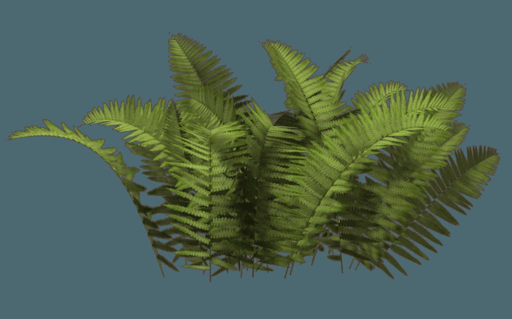 Bush PNG - 18864