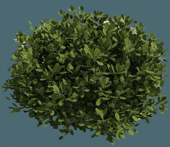 Bush PNG - 18849