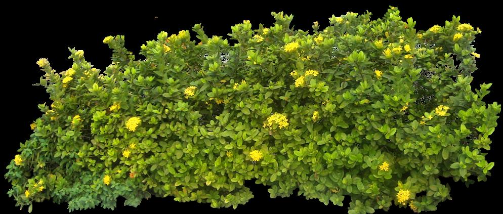 Bush PNG - 18853