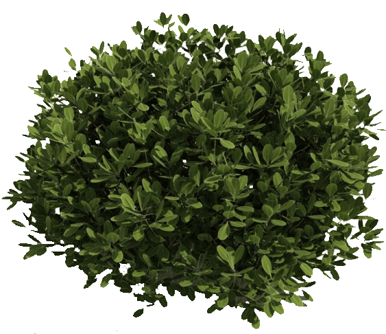 Shrub Bushes PNG - 1533