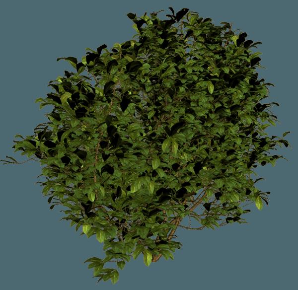 Shrub Bushes PNG - 1535