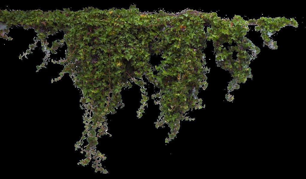 Bush PNG - 18866