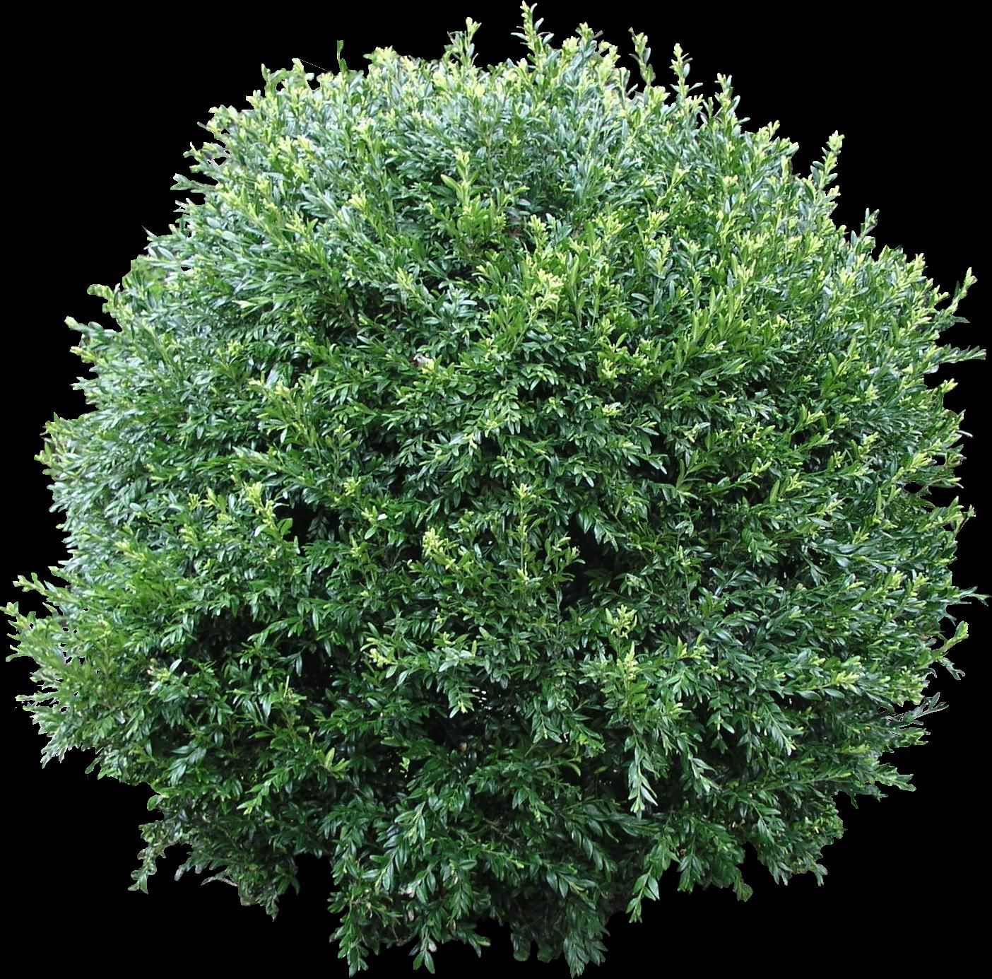 PNG Bush Texture - Bush PNG