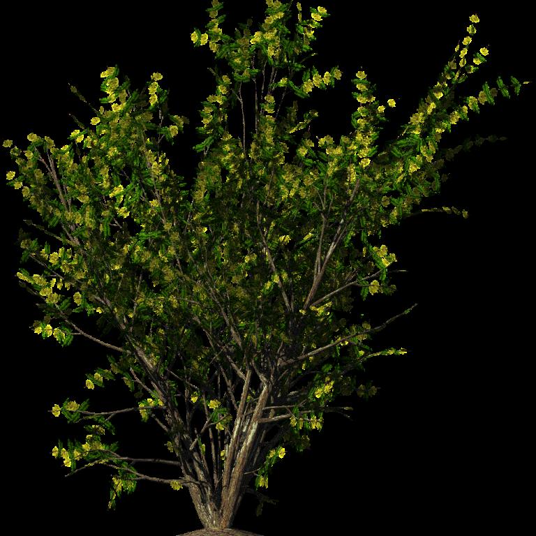 Bush PNG - 18859