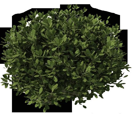 Bush PNG - 18857