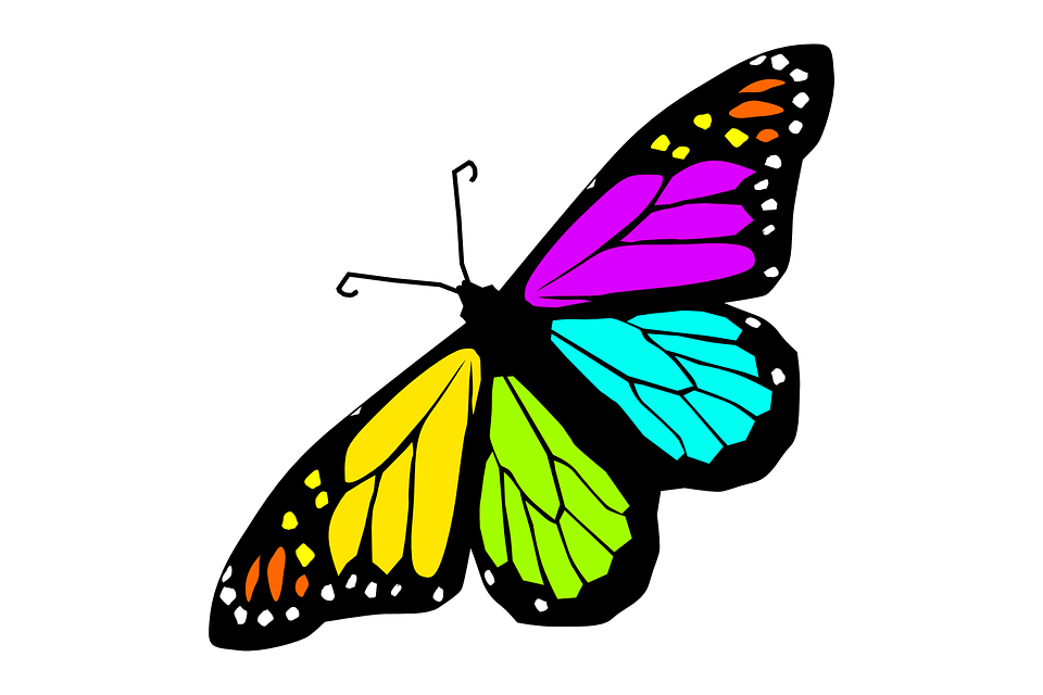 Butterfly Design Spring Summer Decoration Animal - Butterfly Design PNG