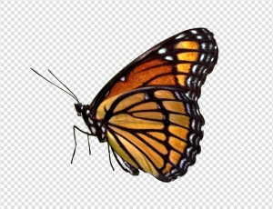 Butterfly PNG image #24