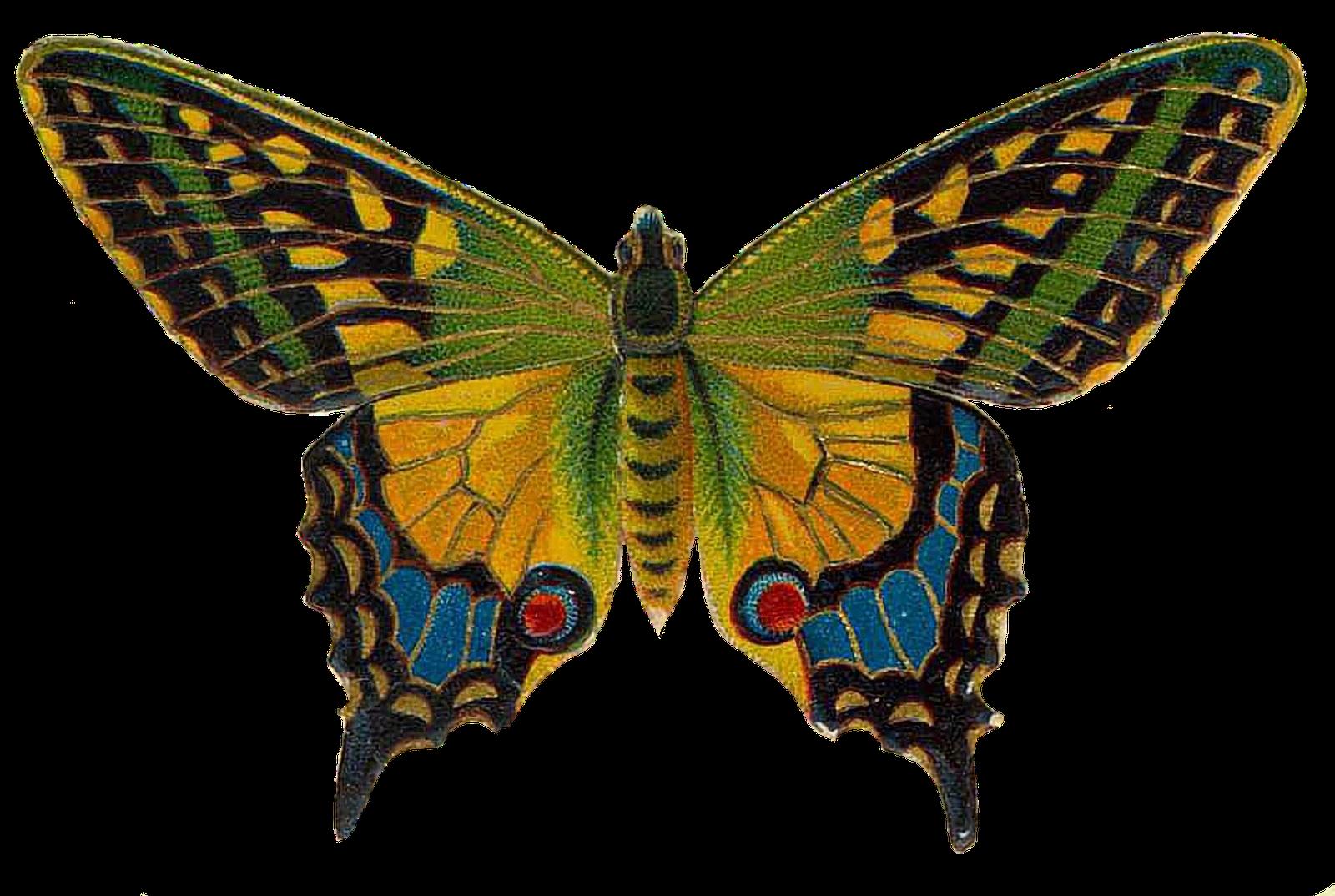 Butterfly Wallpaper Hd Image