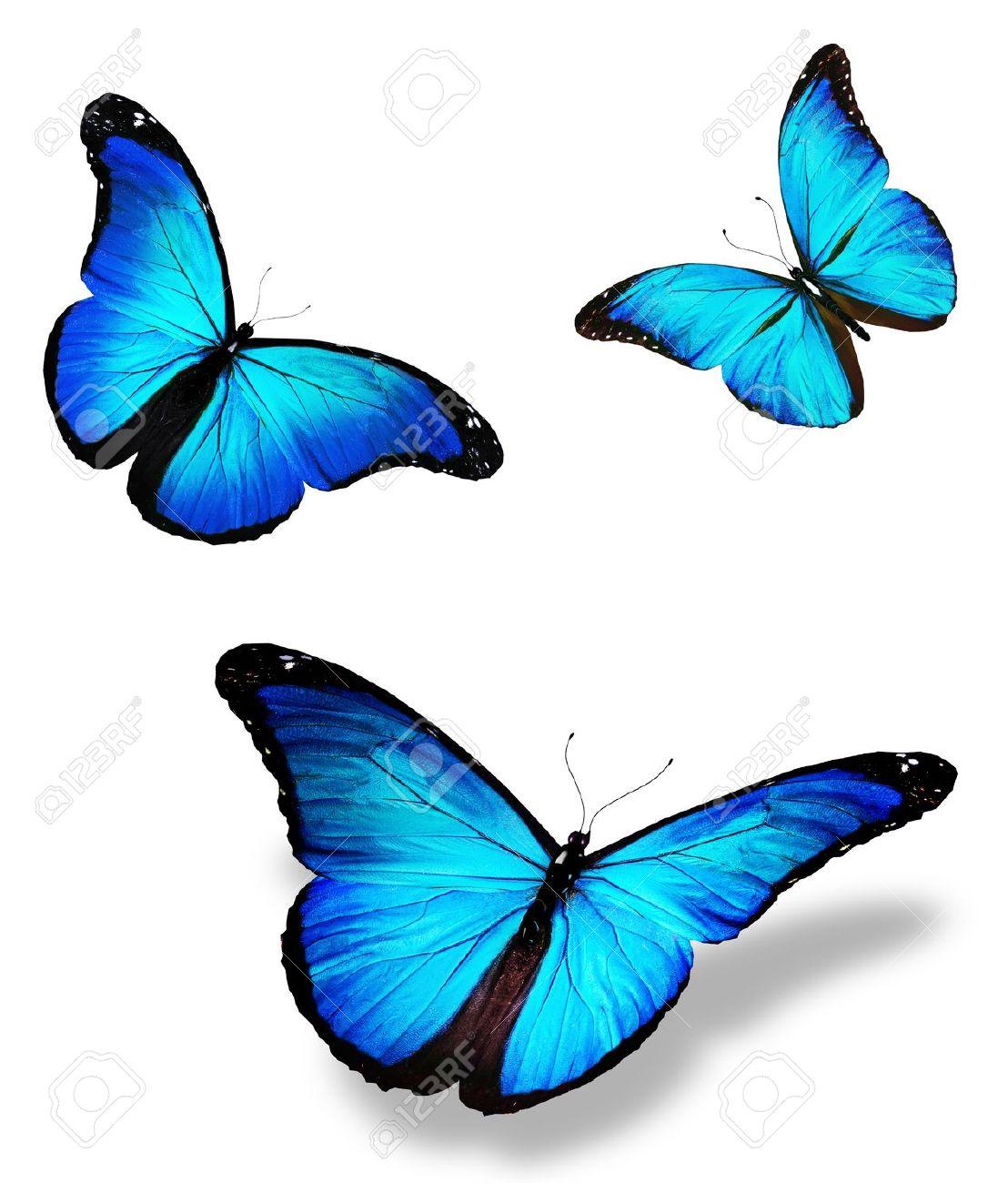 D6d5b4b.png - Butterfly HD PNG