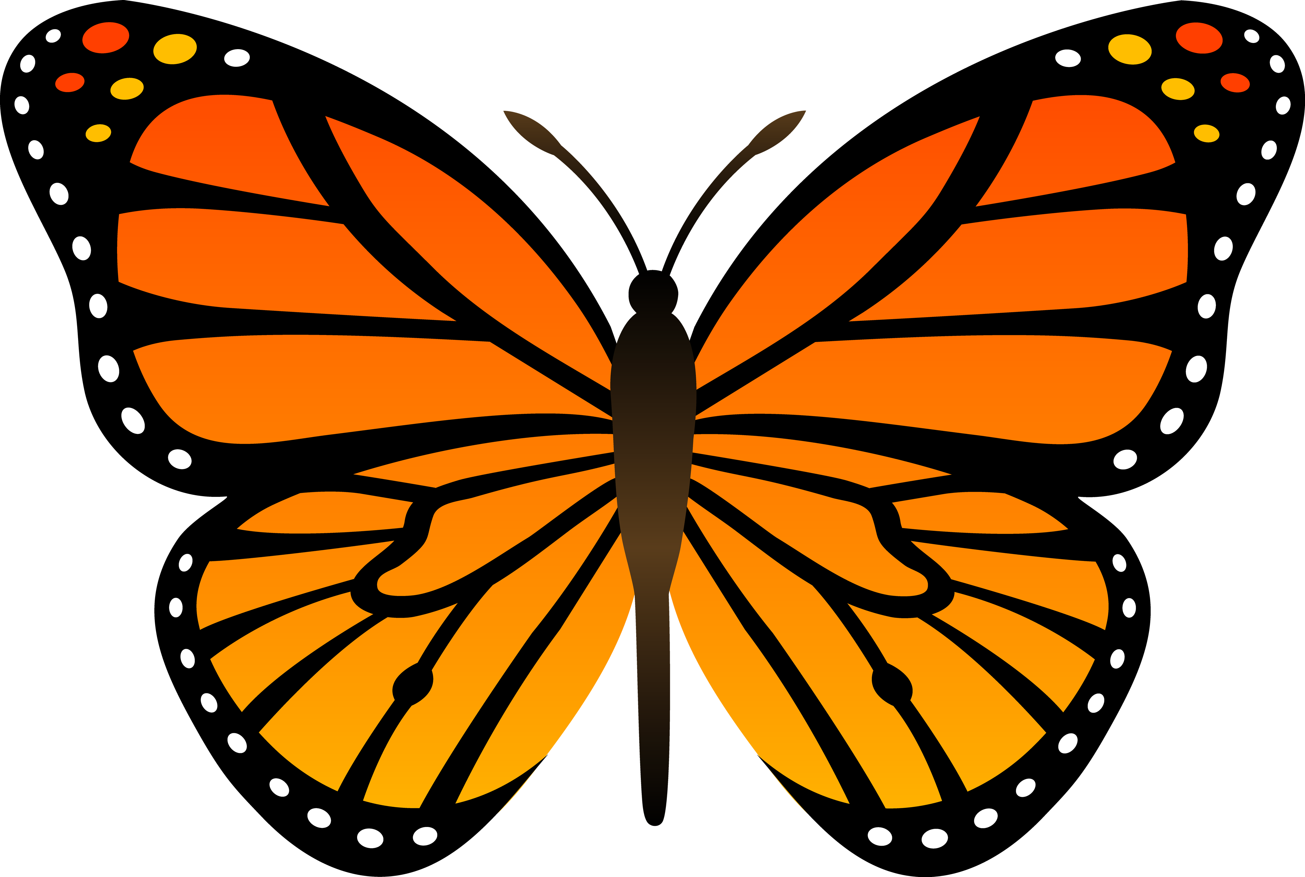 Orange Butterfly PNG Image, Butterflies Free Download - Butterfly HD PNG