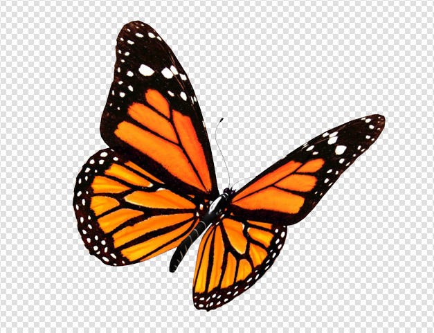 PlusPNG - Butterfly PNG