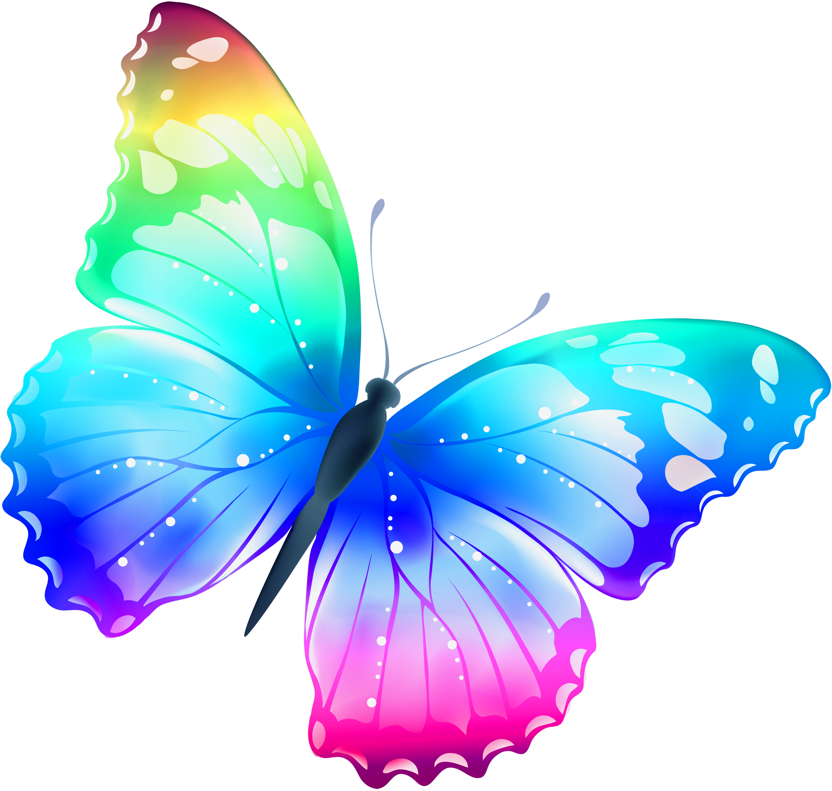 Butterfly PNG - 7549