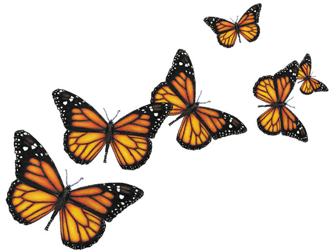 Butterflies Png image #6719 - Butterfly PNG
