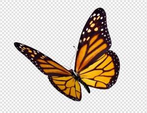 Butterfly PNG Image #11 - Butterfly PNG