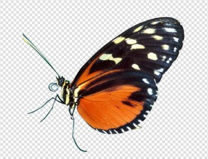 Butterfly PNG Image #2 - Butterfly PNG