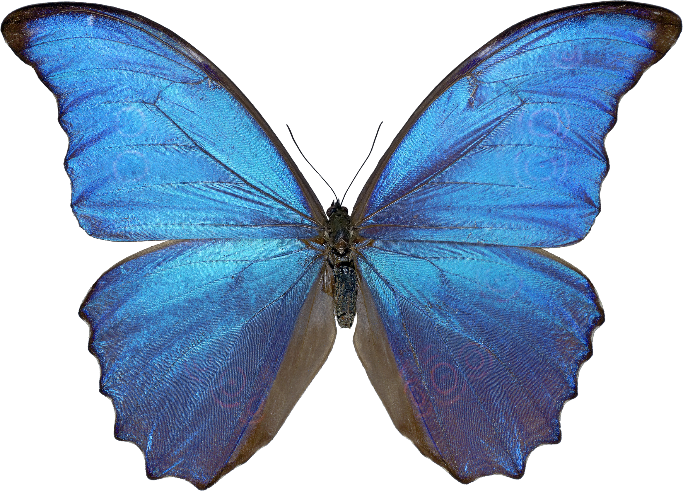Butterfly PNG image - Butterfly PNG