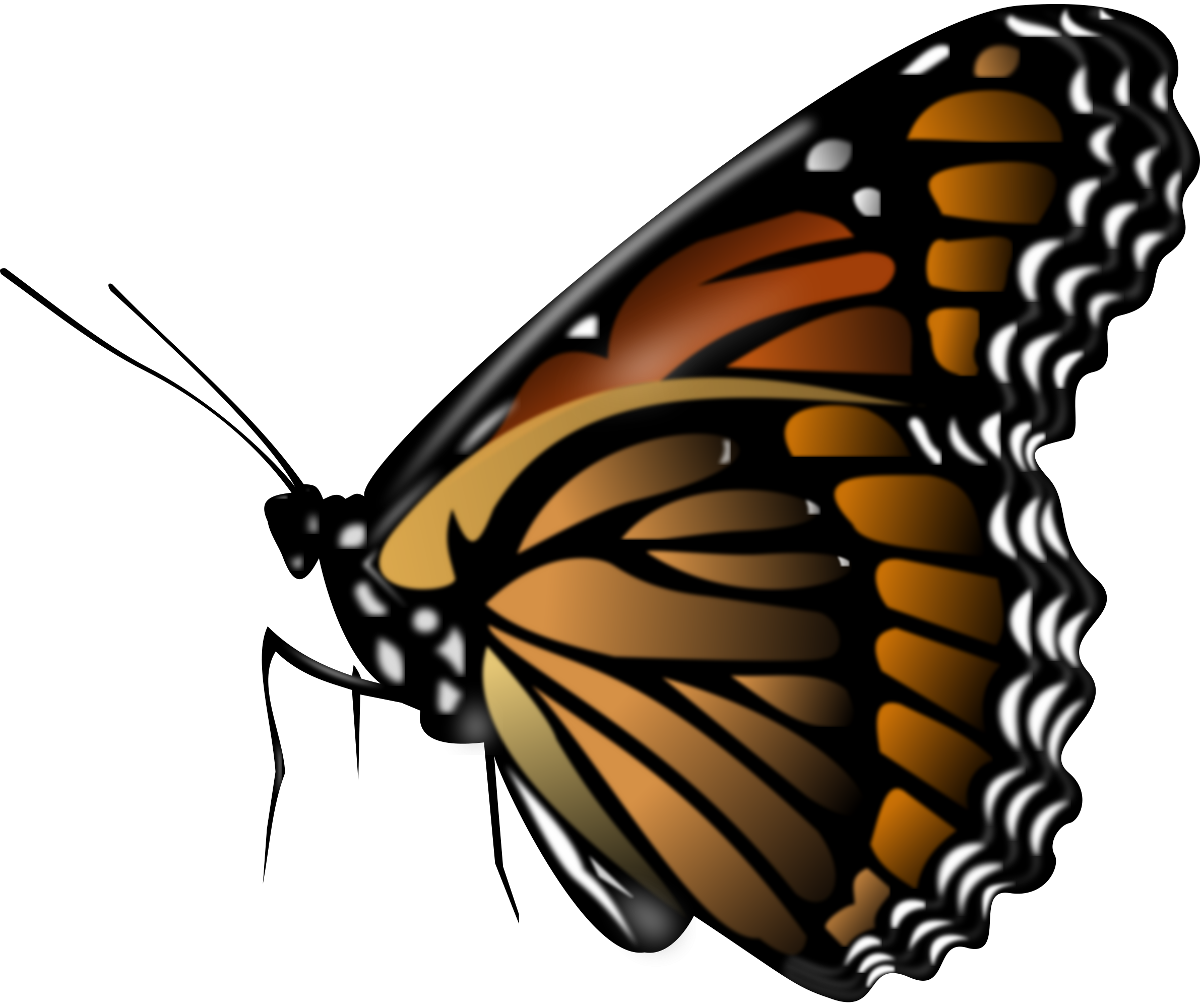 Butterflies Png image #26564