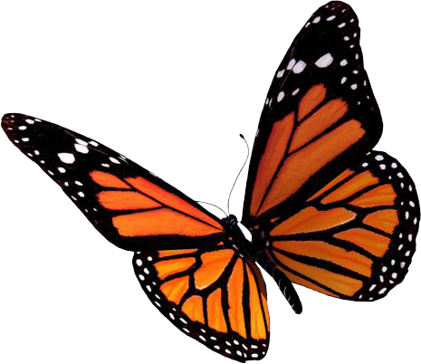 Flying Butterflies PNG Clipart - Butterfly PNG