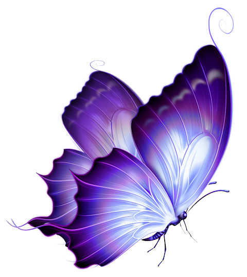 Purple-butterfly-png.png (480×538) - Butterfly PNG