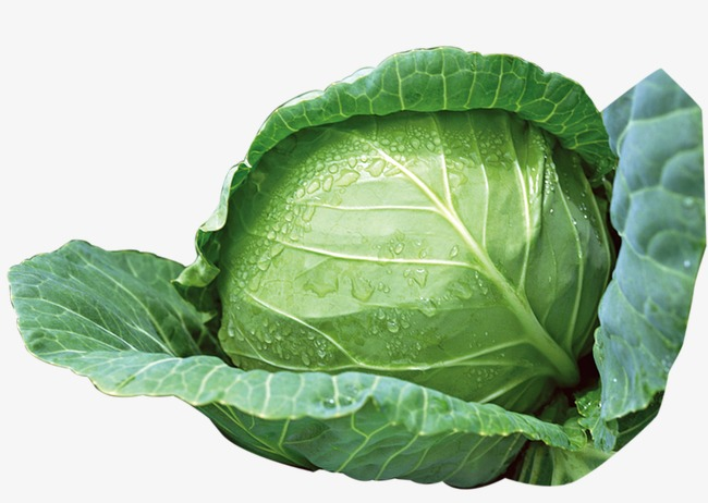 Green cabbage, Vegetables, Cabbage PNG Image and Clipart - Cabbage HD PNG