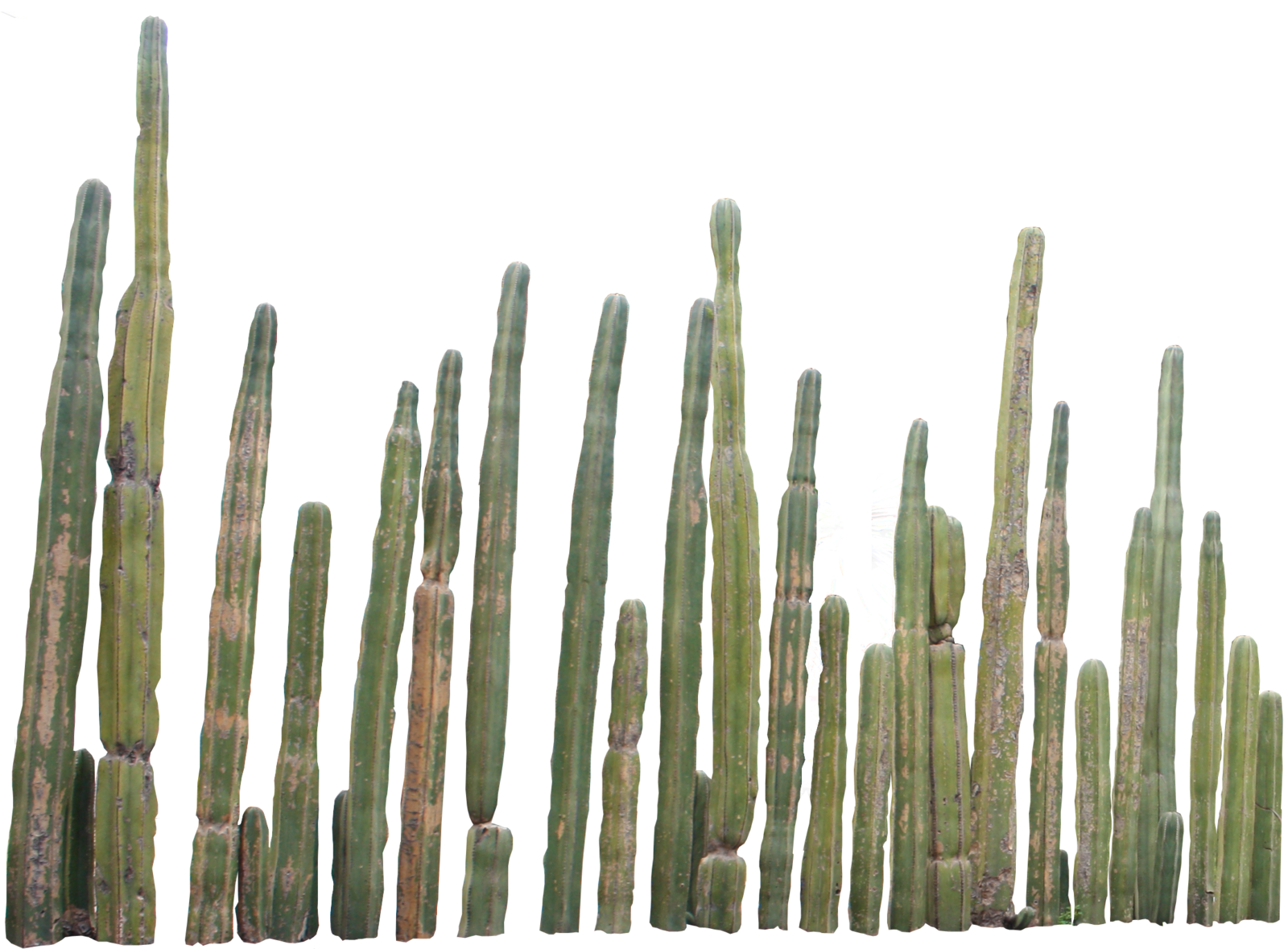 Cactus Png image #24254 - Cactus PNG