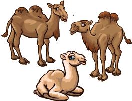 Camel.png - Camel PNG