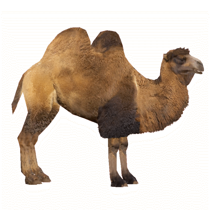 Camel PNG - 21107