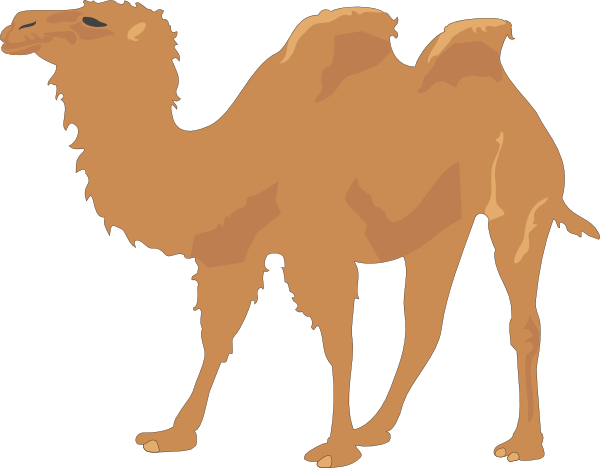 Download this image as: - Camel PNG Cartoon